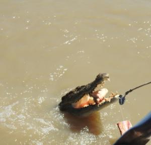 Mit Speck füttert man Krokodile