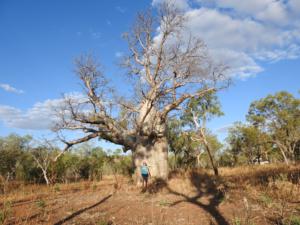 DSCN0687_dagmar_boa_tree