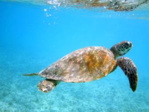 img_4340_osprey_turtle